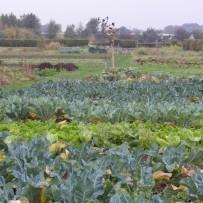 Al meer dan 35 jaar biologische groenten met zorg geteeld.
