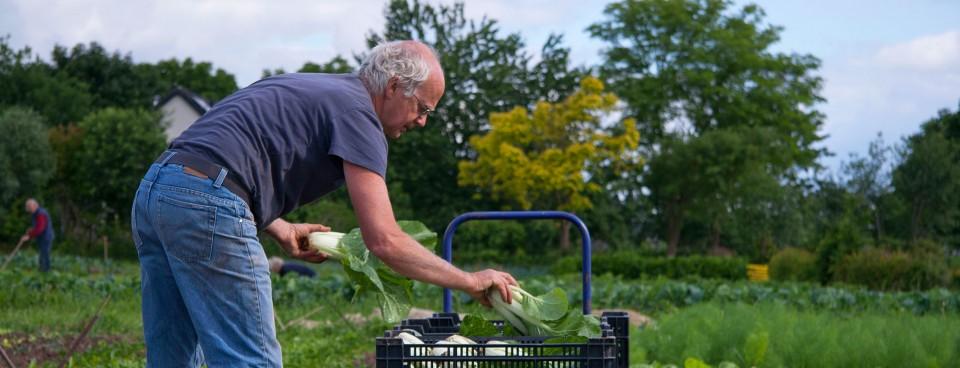 Wekelijks heerlijke seizoensgroenten in boerderijwinkel of groentenpakket.